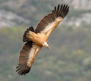 prise de vue d'un aigle